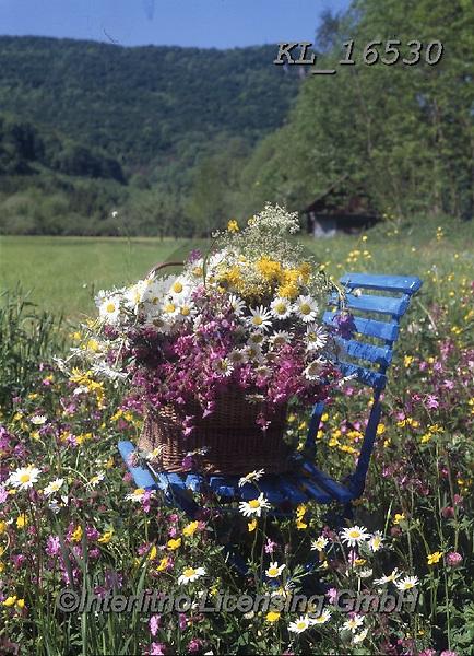 Interlitho-Helga, FLOWERS, BLUMEN, FLORES, photos+++++,meadow, chair,KL16530,#f#, EVERYDAY ,roses