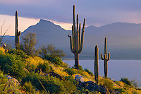 Saguaros and Sierre Ancha<br /> Theodore Roosevelt Lake, Superstition Mountains<br /> Tonto National Forest<br /> Sonoran Desert, Arizona