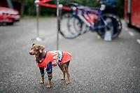 After having 10 bikes stolen just the week prior, Team Bahrain-Merida seriously stepped up their security at the race start... sort of<br /> <br /> Stage 6: Le parc des oiseaux/Villars-Les-Dombes › La Motte-Servolex (147km)<br /> 69th Critérium du Dauphiné 2017