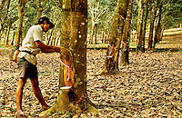 Indonesia. Sumatra. Rubber tapper in commercial plantation.