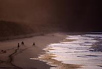 Europe/France/Bretagne/22/Côtes d'Armor/Sable-d'Or-les-Pins: Trotteurs sur la plage