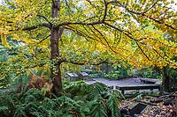 Winter in San Francisco Botanical Garden