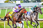 HALLANDALE BEACH, FLORIDA - APRIL 2:  Nyquist #4, ridden by Jockey Mario Gutierrez, coming around the final turn with Majesto #3, ridden by Jockey Javier Castellano on his left, and eventually winning the Florida Derby at Gulfstream Park on April 2, 2016 in Hallandale Beach, Florida (photo by Douglas DeFelice/Eclipse Sportswire/Getty Images)