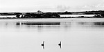 Kangaroo island fog at american river two swans gracefully floating in the lagoon