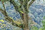 Rainforest, Bwindi Impenetrable National Park, Uganda