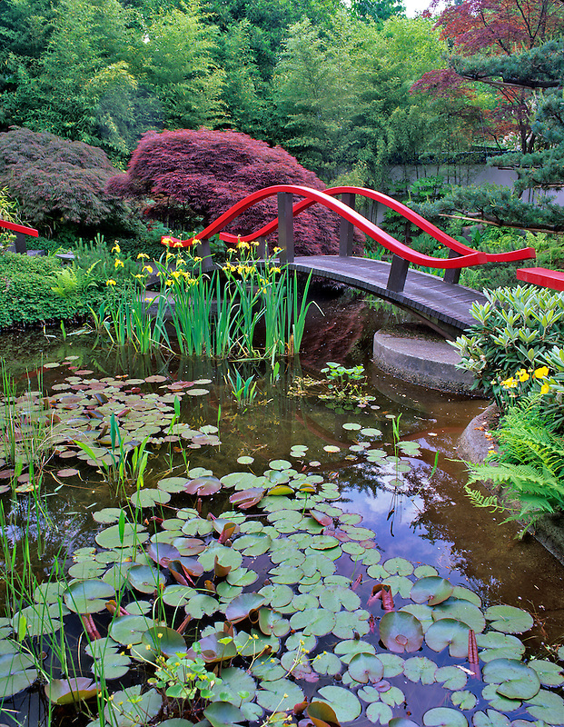 Bridge , pond and water lilies.  Park and Tilford Garden. Vancouver, BC