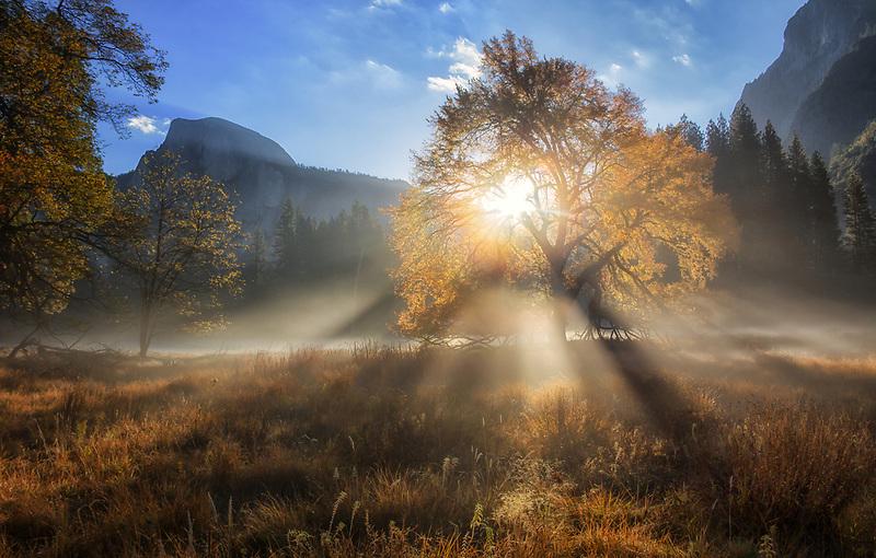 Sunburst through oak tree in Cook's Meadow, Yosemite National Park, California