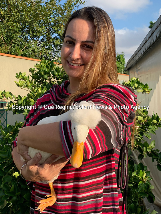 Pictured:  Guerdlei Grodzki with Britney.<br /> <br /> A stylish duck with a white quiff and inverted foot looks like Elvis Presley dancing.  The eight month old crested duck, called Britney, suffered a broken foot when she was younger - which with her hair makes the Elvis resemblance all the more uncanny.<br /> <br /> Despite her injury resulting from rough play with the family dog, Britney still sees herself as more of a Hound Dog, and prefers the company of canines to fellow birds.  The photos were taken by her owner, Guerdlei Grodzki, in her home in the city of Curitiba, in the southern Brazilian state of Paraná.  SEE OUR COPY FOR DETAILS.<br /> <br /> Please byline: Gué Regina/Solent News<br /> <br /> © Gué Regina/Solent News & Photo Agency<br /> UK +44 (0) 2380 458800