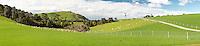 Farmland with sheep near Purakaunui Falls, Catlins, Southland, South Island, New Zealand