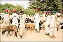 2006- Inde- désert du Rajasthan- groupe de berger.