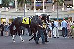 Hallandale Beach, FL- February 06: Scenes from Donn Handicap Day at Gulfstream Park. (Photo by Arron Haggart)