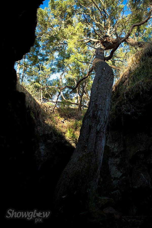 Image Ref: CA474<br /> Location: Mt Eccles National Park<br /> Date of Shot: 23rd November 2017