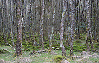 The forest at Glendalough.