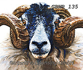 Simon, REALISTIC ANIMALS, REALISTISCHE TIERE, ANIMALES REALISTICOS, paintings+++++Card_OliviaH_SwaledaleRam,GBWR135,#a#, EVERYDAY,sheep