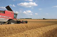 19-7-2021 Harvesting Winter barley in Rutland <br /> ©Tim Scrivener Photographer 07850 303986<br />      ....Covering Agriculture In The UK....