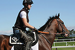 June 6, 2014: Medal Count enters the track for his morning gallop. Belmont contenders gallop, bathe and walk the shed row the day before the Belmont Stakes. ©Joan Fairman Kanes/ESW/CSM
