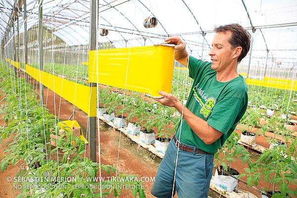 Jean-Louis Bossard (Le Jardin calédonien à Dumbéa) en train de poser des pièges à insectes