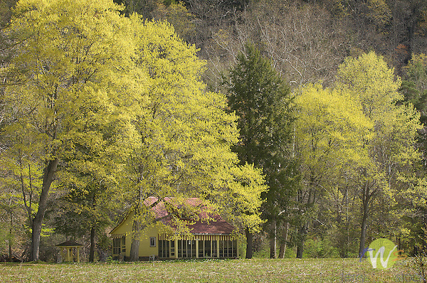 colorful cottage along 220, Lycoming County, PA