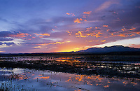 Sunset over Wetland with sandhill cranes, Bosque del Apache National Wildlife Refuge, Socorro, New Mexico, USA,