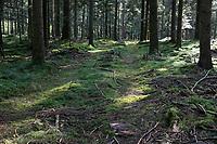 GERMANY, lower saxonia, Forest / DEUTSCHLAND, Niedersachsen, Fichtenwald, kranke Fichten durch Dürre und Borkenkäferbefall