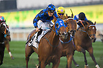 DUBAI,UNITED ARAB EMIRATES-MARCH 26: Buffering,ridden by Damian Browne,wins the Al Quoz Sprint at Meydan Racecourse on March 26,2016 in Dubai,UAE (Photo by Kaz Ishida)