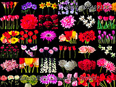 Assaf, LANDSCAPES, LANDSCHAFTEN, PAISAJES, collages, paintings,+Black Background, Collage, Floral, Flower, Flowers, Multicolored, Multicoloured, Photography,Black Background, Collage, Flora+l, Flower, Flowers, Multicolored, Multicoloured, Photography+++,GBAF20140915E,#l#, EVERYDAY ,puzzle,puzzles ,collage,collages
