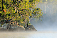 """""""Jack Pine Unveiling""""<br /> <br /> The golden sun raises the curtain of the morning fog, exposing the incredible shoreline of Boundary Waters Canoe Area Wilderness (BWCAW)."""