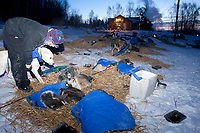 Ciny Gallea feeds her dogs during her 24 hour layover as dawn breaks at the Takotna checkpoint at 15 degrees below zero during the 2010 Iditarod