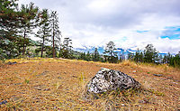 Fine Art Landscape Photograph of a speckled rock at the Garnet Fire Interpretative site in Penticton, British Columbia Canada.