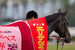 KYOTO,JAPAN-NOVEMBER 13: Queens Ring,ridden by Mirco Demuro, after winning the Queen Elizabeth II Cup at Kyoto Racecourse on November 13,2016 in Kyoto,Kyoto,Japan (Photo by Kaz Ishida/Eclipse Sportswire/Getty Images)