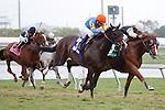 Simmard(5) with jockey Javier Castellano up dueling with Newsdad (3) and jockey Julien Laparoux before winning the Mac Diarmida(G2T) at Gulfstream Park. Hallandale Beach, Florida. 02-26-2012