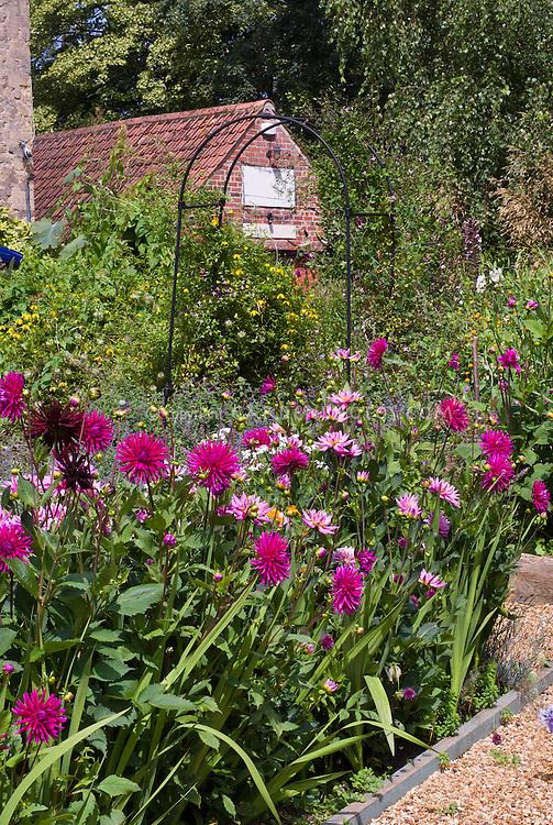 Dahlia garden mix in garden bed with brick house in background, cutting garden