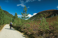 Creag nan Gall from The Thieves Road, The Cateran's Trail, Glen More, Cairngorm National Park