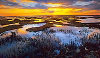 Tidal Salt Marsh, at high tide, Great Bay Wildlife Management Area, New Jersey