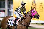 Jockey Karis Teetan riding High Volatility celebrates after winning the Jardine Handicap on 29 March 2017, at Happy Valley Racecourse in Hong Kong, China. Photo by Chris Wong / Power Sport Images