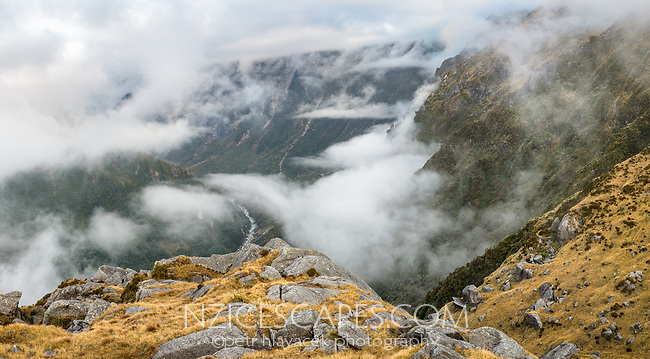 Moody alpine views into Cook River valley, Westland Tai Poutini National Park, UNESCO World Heritage Area, West Coast, New Zealand, NZ