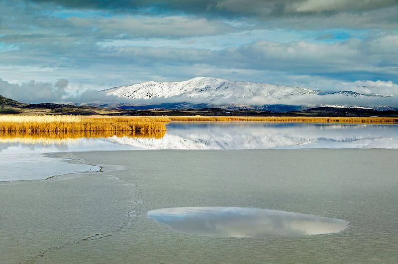 Reflection in pond with ice Lower Klamath Lake National Wildlife Refuge, California
