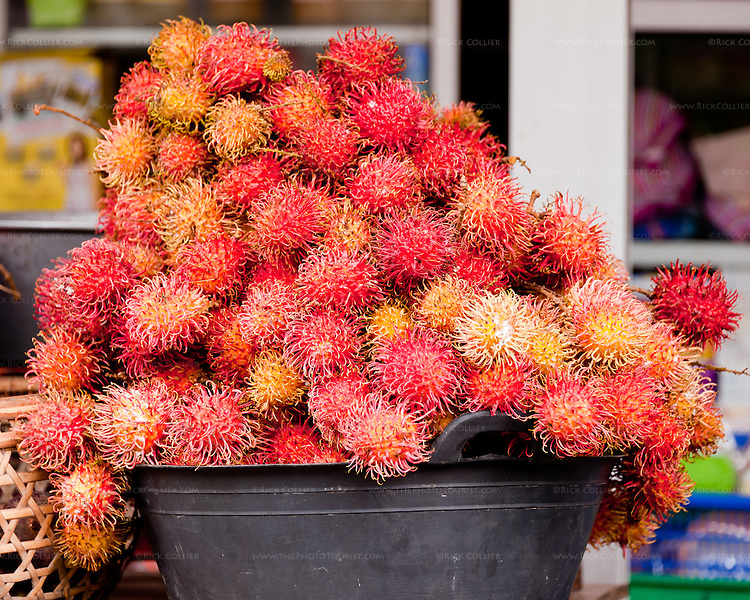 Hair fruits (rambutan) are sold at road-side stands all over the island of Bali, in Indonesia.  (Seen on a table at a roadside stand, on the road from Singraja at the north to Ubud, in south-central Bali.)