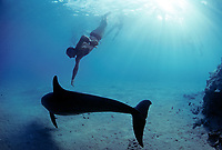 Snorkeler swimming with wild Bottlenose Dolphin, Tursiops truncatus, playing with Sea Cucumber, Holothuria edulis, Nuweiba, Egypt, Red Sea., Northern Africa