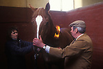 Brian Higham long serving Stud Groom at The Duke of Beaufort Badminton House estate. Seen here with stable girl 'flaming' a horse to burn down the tiny horse hairs that are sticking out so as to make it look perfect.