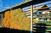 "Crops drying in hayrack, or ""Kozolec"", near village of Zasip, Slovenia, AGPix_0549."
