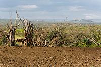 Tanzania. Maasai Village of Ololosokwan, Livestock Corral, Northern Serengeti.