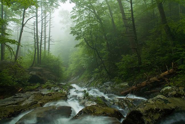Spring flow on Whiteoak Run, Whiteoak Canyon, Shenandoah National Park, Virginia