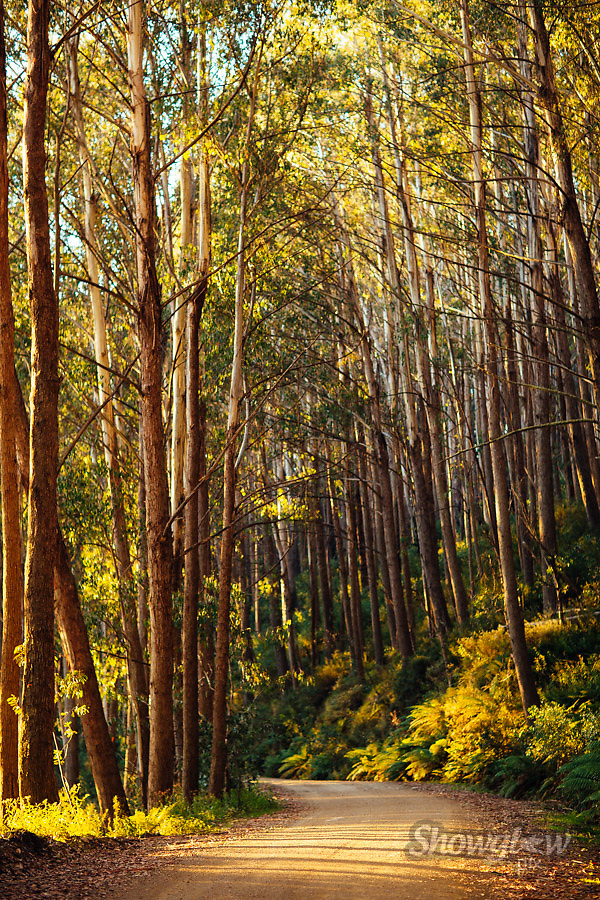 Image Ref: HC121<br /> Location: Circuit Rd, Mt Buller<br /> Date: 21 March, 2015