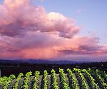 Storm clouds over vineyard