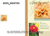 Alfredo, FLOWERS, BLUMEN, FLORES,  photos+++++,BRTOXX02728,#F#