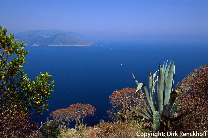 Italien, Capri, Blick von Villa Jovis des Tiberius, Agave
