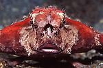 Batfish full front w probiscus
