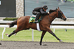 April 03, 2014: Hip 23 Warrior's Reward - Past Twilight consigned by Wavertree Stables worked 1/8 in 09:4.  Candice Chavez/ESW/CSM