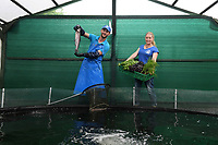 BNPS.co.uk (01202) 558833<br /> Pic: BNPS<br /> <br /> Pictured: Antonio Paladino and Amanda Heron run the farm<br /> <br /> Something fishy or food for thought?<br /> <br /> A chef turned farmer is leading the way in sustainable farming by using fish poo as fertiliser.<br /> <br /> Antonio Palladino farms organically-fed rainbow trout and uses their waste to grow about 50 different fruits and vegetables without the need for soil.<br /> <br /> He says using fish waste as fertiliser is the most sustainable farming method and produces a bigger and much tastier crop.
